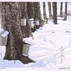 Taste of place: The terroirs of Vermont maple syrup